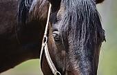 말 (馬)